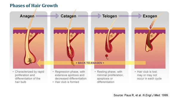 Slide 3: Hair Anatomy and Physiology