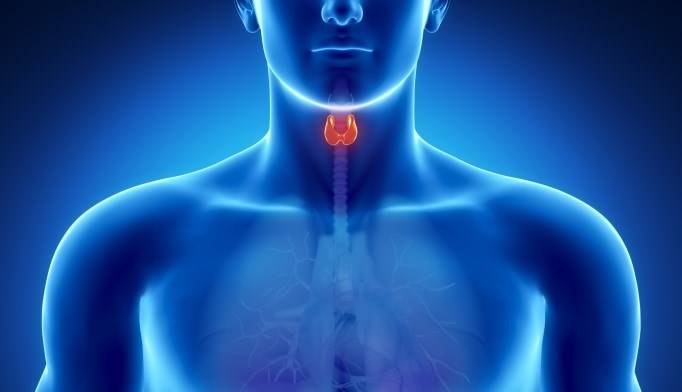 Survival Improvements for Thyroid Cancer with Lithium and Radioactive Iodine Therapy