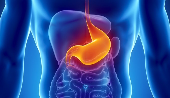 Gut Microbiome May Play Role in BMI, Lipid Level Variations