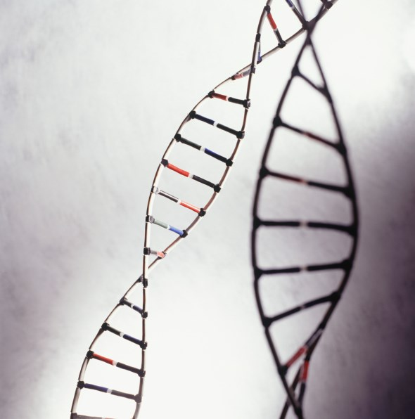 Two Novel Genetic Variants Discovered in Breast Cancer