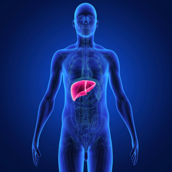Stivarga gains FDA approval to treat liver cancer