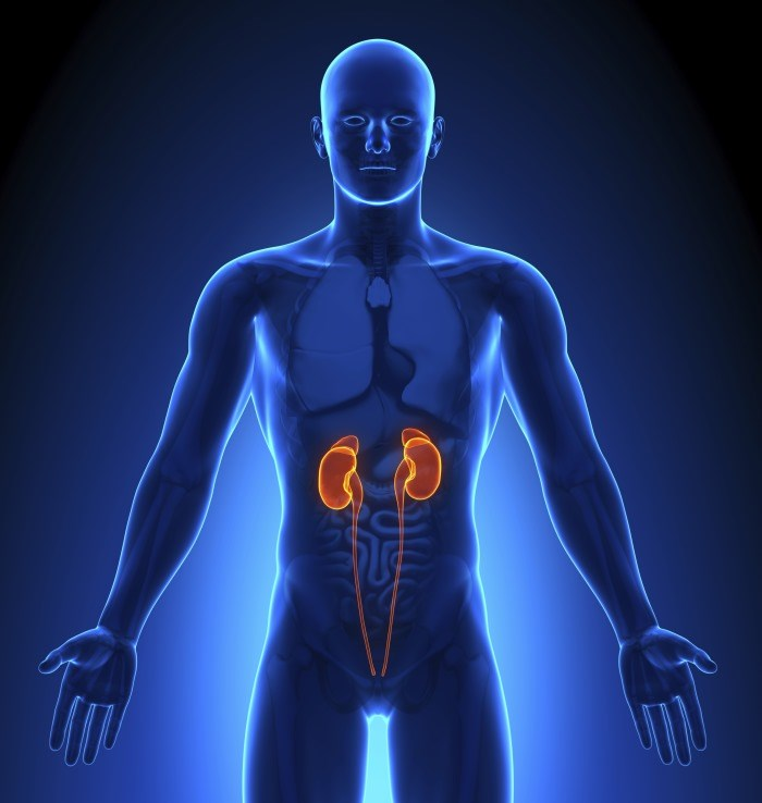 Study Suggests Renal Cell Carcinoma Reprograms its Metabolism to Evade Immune System