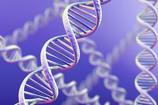 Four regions in the human genome linked to pancreatic cancer risk have been identified.