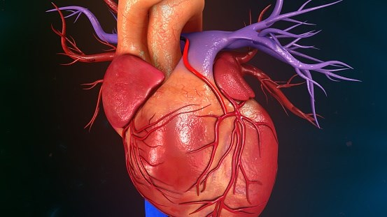 Any Coronary Artery Calcium in 30s and 40s Ups Cardiovascular Risks