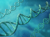 Researchers find BRCA2 mutations are associated with worse outcomes among men with mCRPC.