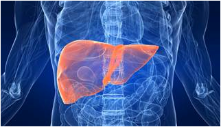 Updated ASCO Guidelines for Hepatitis B Screening in Cancer