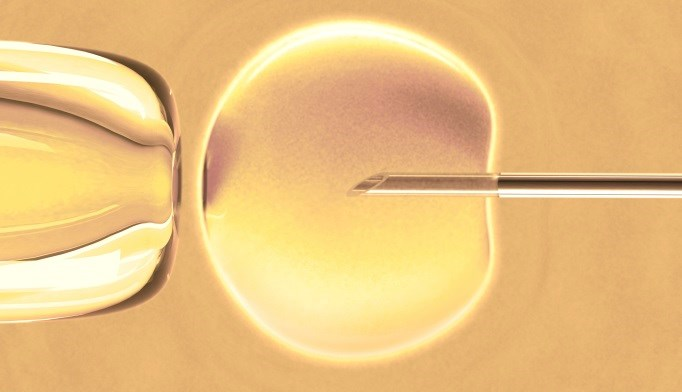 In Vitro Fertilization Birth Rates Increasing