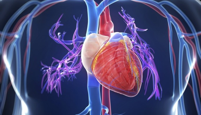 Researchers may have found a way to identify adult lymphoma survivors at increased risk for left ventricular systolic dysfunction.