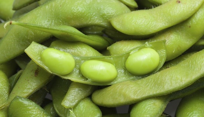 Soy Intake Not Linked to Endometrial Cancer Risk