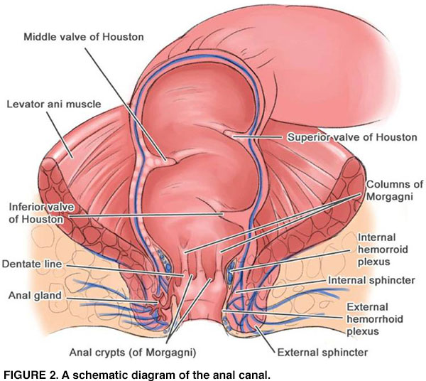 Anal fistula defined