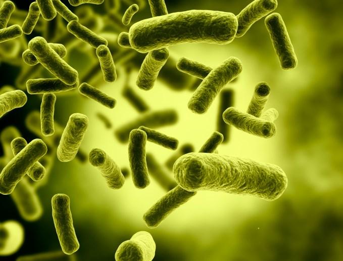 Microbiota and Cancer
