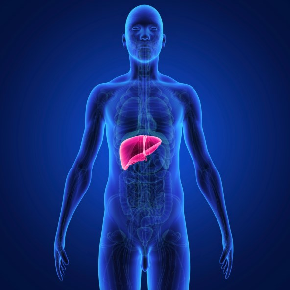 Previous studies have demonstrated tivantinib prolonged progression-free survival and overall survival in hepatocellular carcinoma.