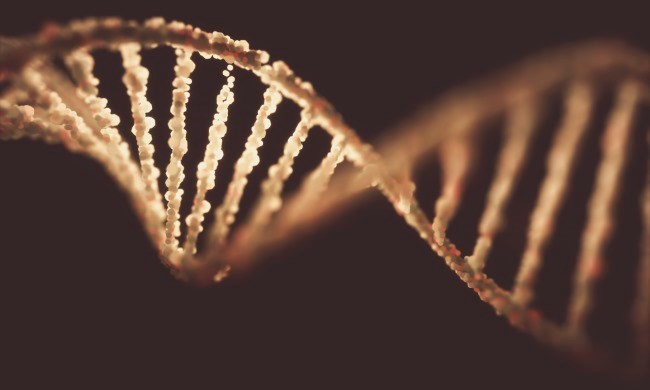 Researchers identified MSH6 and ATM as possible new predisposition genes that confer a moderate risk for breast and ovarian cancers, respectively.