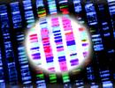 Genetic Testing and Cancer