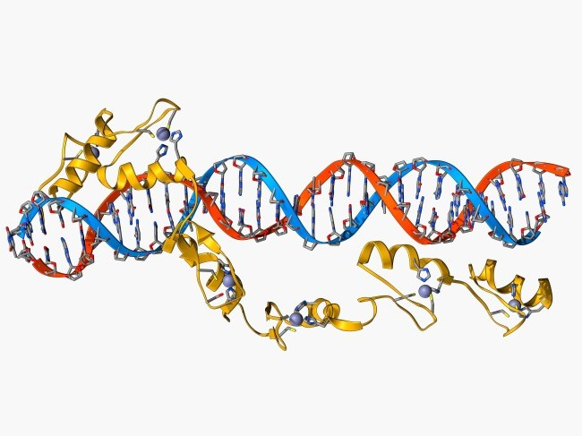 A new screening approach identifies more than 200 lncRNAs essential for survival in CML cells, suggesting lncRNAs could be good prospective targets for therapies.