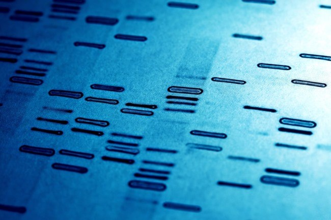 Researchers provide further proof that CRISPR can augment cancer treatment in the lab, but many barriers remain before clinical trials can be conducted in patients.