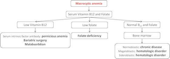 Case study of a patient with anemia – Barbra Dozier's Blog